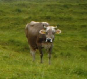 Bauernsterben geht weiter (Foto: Schlagwort AG)