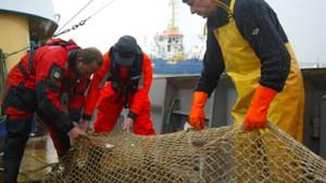 Fischerei-Quoten: EU beschließt Kürzung wegen Überfischung der Meere
