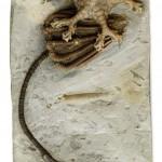 Aathal-Seegräben: 300 Millionen Jahre altes Diebesgut – Zeugenaufruf der Kantonspolizei