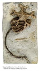 Sauriermuseum Aathal: Fossil-Diebstahl (Polizeifoto: Kapo Zürich)