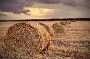 Zeitbudgeerhebung in der Landwirtschaft