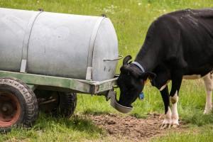VBS - Armee beendet Einsatz im Kanton Waadt. Trinkstelle für die Kühe vom Militär. (Symbolbild)
