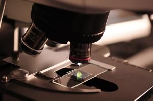 Die Strategie eines Tumors: Teile und herrsche. (Symbolbild)