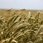 Gute landwirtschaftliche Einkommen 2014