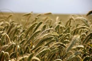 Gute landwirtschaftliche Einkommen. (Symbolbild)