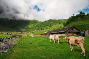 Zivi-Einsätze auf der Alp sind erfolgreich. (Symbolbild)