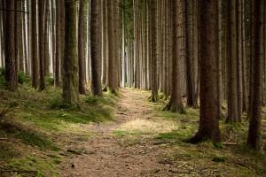 3. Europäische Waldwoche: Empfehlungen für die nachhaltige Waldbewirtschaftung. (Symbolbild)