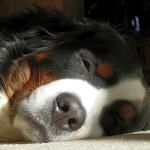 Hund zu Tode gequält – Zeugenaufruf