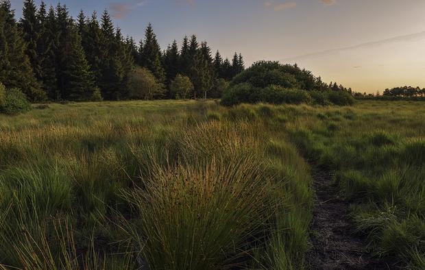 Moorlandschaft mit Moorpflanzen wie Binsen