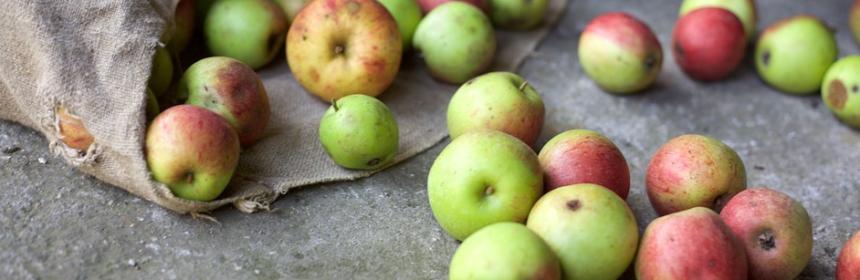 """Lebensmittelabfall (""""food waste"""") verursacht Umweltbelastung"""